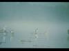 mm_5rano-jezioro-sasek-wlk01079