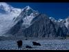 mm_pakistan-dolina-lodowca-batura00902