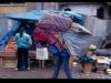 mm_peru-cuzco00099